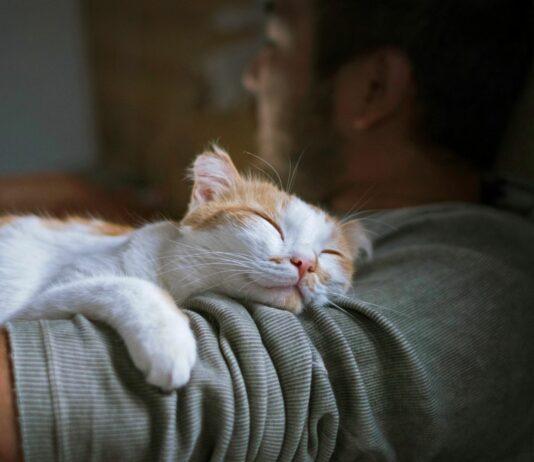 ¿Por qué los gatos ronronean? | ¡Te sorprenderá!