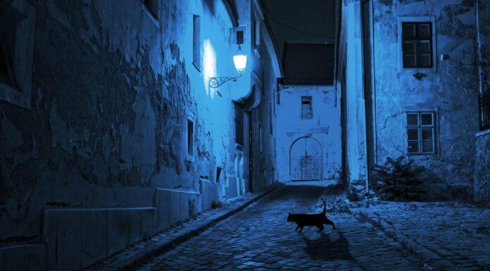 De noche todos los gatos son pardos | ¿qué significa esta expresión?
