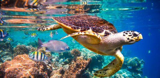 Datos curiosos de las tortugas