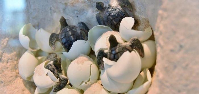 Datos sobre las tortugas