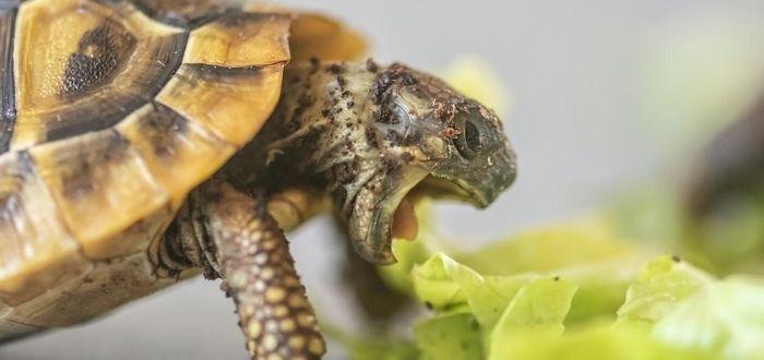 Lo que no sabías de las tortugas