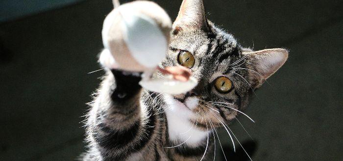 ¿Para qué sirven los bigotes de los gatos?
