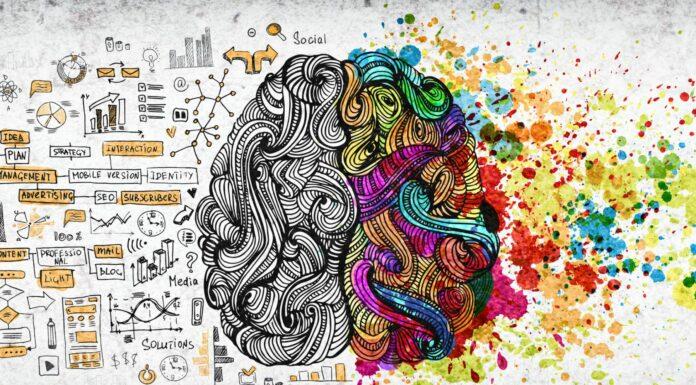 ¿Por qué el cerebro tiene dos mitades? | ¡Descúbrelo!