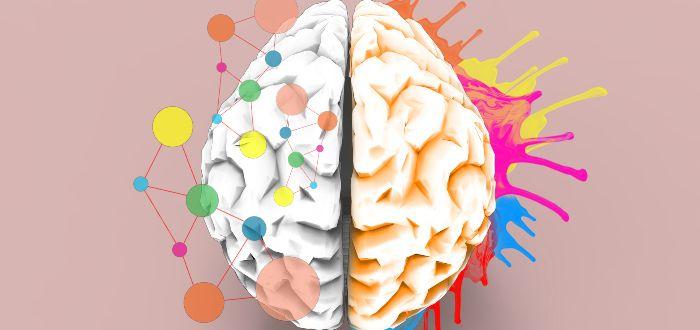 ¿Por qué el cerebro tiene dos mitades?