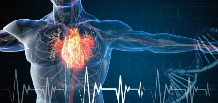 corazón tridimensional