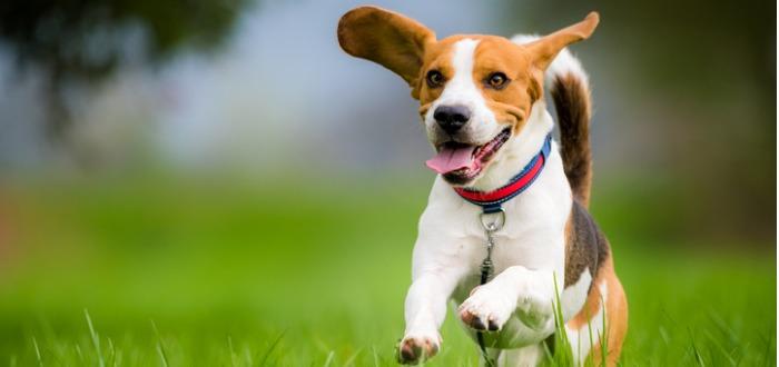 los perros medianos más juguetones y divertidos