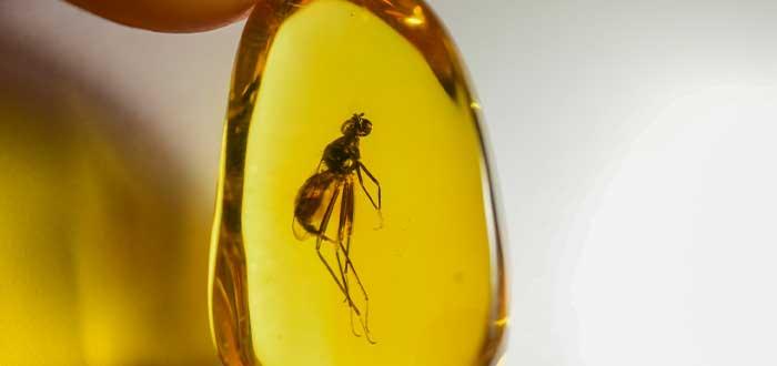 insecto ambar