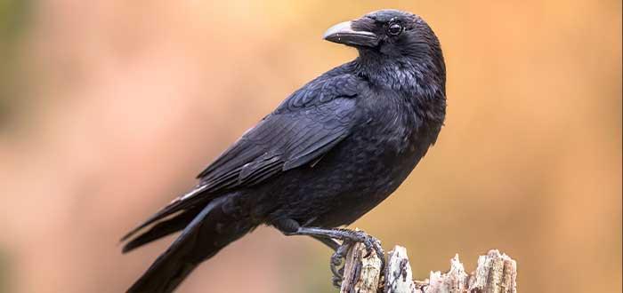las caracteristicas de estas aves