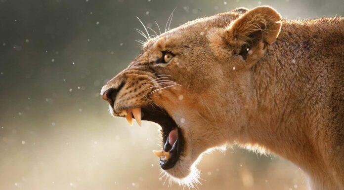 los animales mas letales del mundo